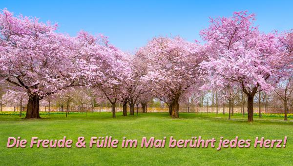 Die Freude und Fülle im Mai berührt jedes Herz!