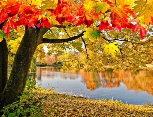 Herbstkur und Aktuelles