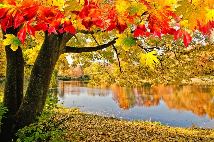 Herbst News 2015 Naturheilpraxis Gisela Frede